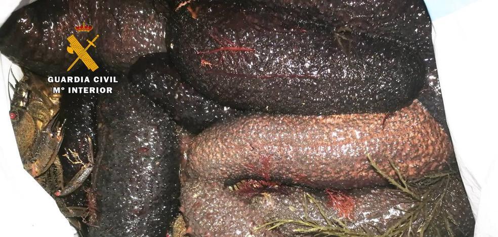La Guardia Civil interviene 40 kilos de marisco capturados de manera ilegal