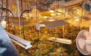 Descubren una plantación de marihuana en una casa en Penagos y otra en una finca de Queveda