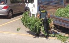 UniónGC se queja de los problemas de salud que genera a los agentes la manipulación de la marihuana que incautan
