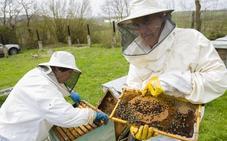 Los apicultores piden ayuda tras una cosecha de miel «catastrófica» por el mal tiempo