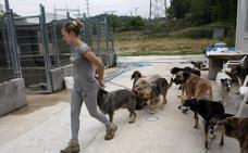 Los proyectos de protección y bienestar animal se repartirán 40.000 euros en subvenciones