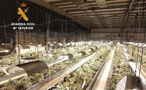 Otros seis detenidos por gestionar la plantación de marihuana más grande de Cantabria