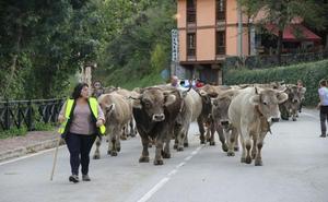 33 ganaderos participaron en la Feria del Pilar de Camaleño