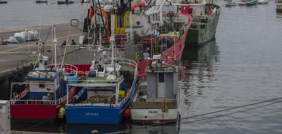 Pesca anuncia una reapertura de la costera del bonito sin efectos prácticos