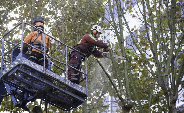 Poda de árboles en Santander