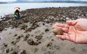 Reabierta al marisqueo la zona de Páramos Norte de la bahía de Santoña
