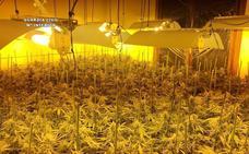 Desmantelan otras dos plantaciones de marihuana en viviendas de Treto y Gama