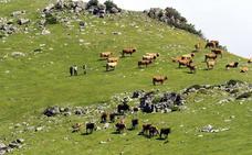 El Gobierno indemnizará a los ganaderos que no puedan llevar sus reses a los pastos comunales