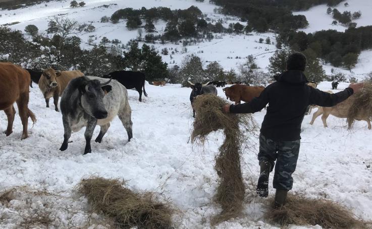 Estampas nevadas en Las Rozas de Valdearroyo