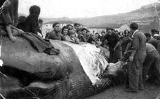 La ballena que Santoña nunca olvidará