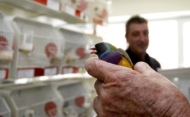 Primer concurso ornitológico interregional Federaciones del Norte