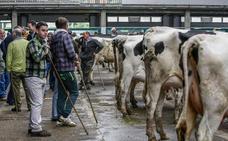 Cantabria registró en septiembre el precio de leche en origen más bajo de España