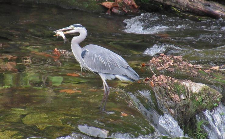 Recuperación medioambiental del río Besaya