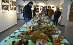 Colindres celebra este fin de semana sus jornadas micológicas