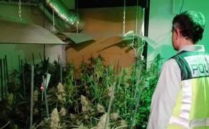 Detenido por convertir su chalé de Santillana en una plantación interior de marihuana