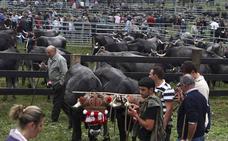 Treceño vive la Feria de San Martín