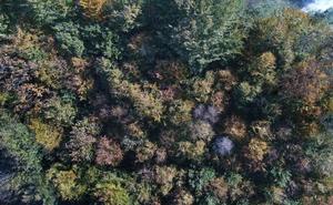 El otoño enciende el paisaje