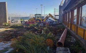 El puerto tala las palmeras de la Estación Marítima y en su lugar se creará un jardín