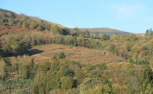 Ecologistas y vecinos denuncian la tala de árboles autóctonos en el monte de Terán