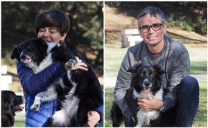 Apunta a tu mascota a la lucha contra el cáncer en Cantabria