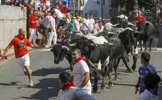 Turismo pide a Ampuero que confirme que no hay maltrato animal en sus encerronas