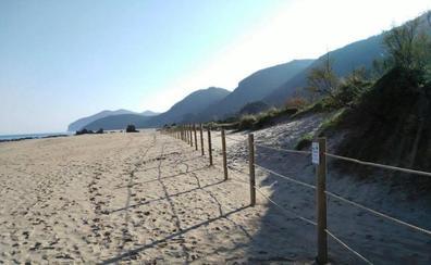 Los reclusos de El Dueso participan en la restauración dunar de Helgueras