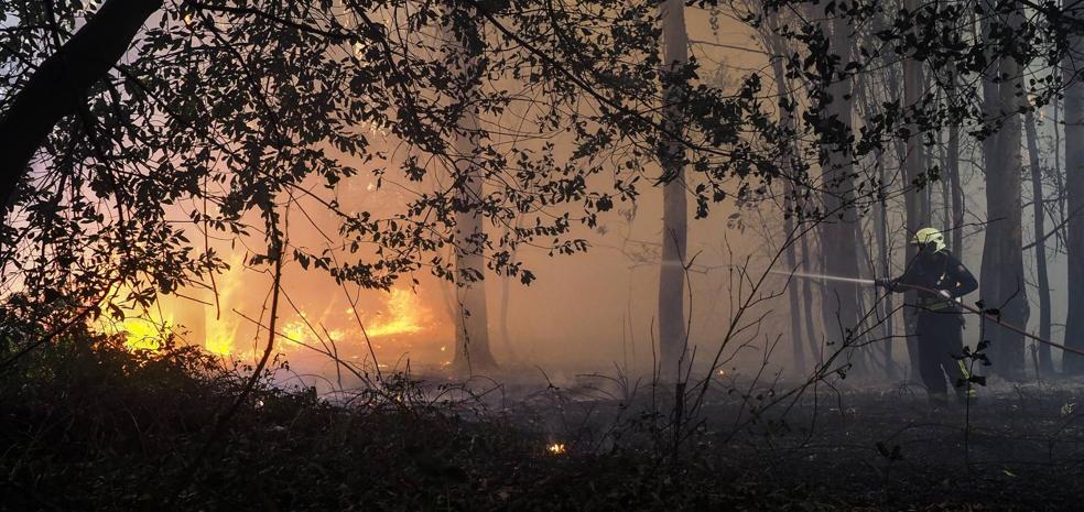 Un incendio en un eucaliptal amenaza una vivienda en Pontejos