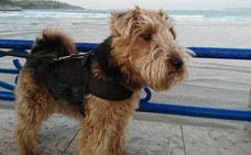 ¿Cómo es un perro 'Biodogtor'?