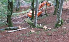 Los ecologistas denuncian de nuevo la tala de hayas en Saja