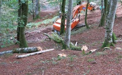 Medio Natural dice que la tala de hayas en el Saja es «insignificante»