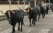 Feria en Ibio