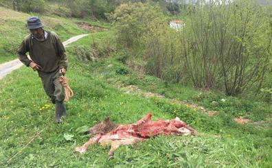 El Gobierno extenderá en 2019 las ayudas por los daños del lobo a toda Cantabria con una nueva póliza de seguro
