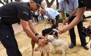 La Policía Local adquiere lectores de microchips para localizar a los dueños de mascotas