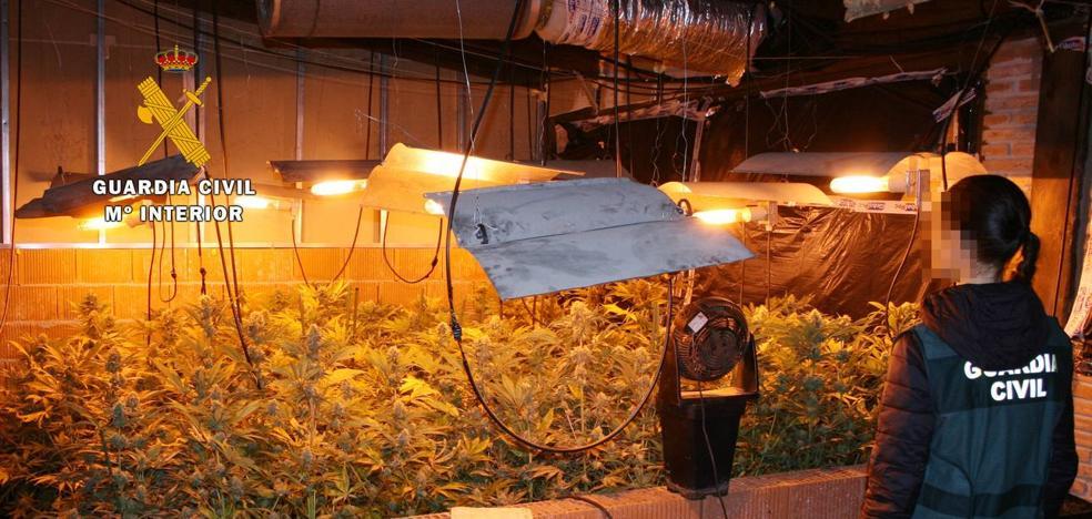 Desmantelan en Liérganes una plantación de marihuana de más de 1.000 plantas