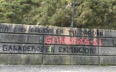Medio Rural defiende la «absoluta legalidad» de las batidas de lobos en Picos de Europa
