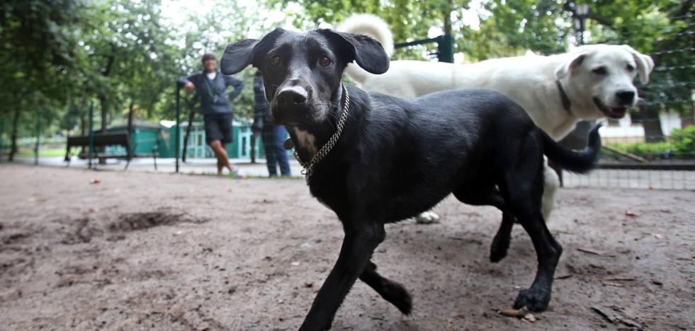 Torrelavega tendrá su primer parque canino el próximo año