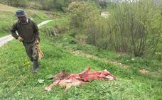 Ganaderos y ecologistas exigen incrementar las ayudas por los ataques del lobo