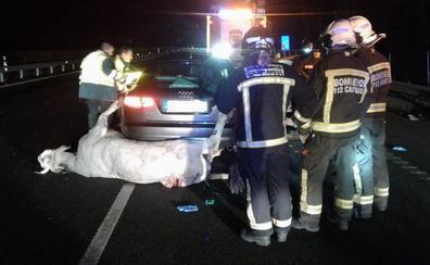 Fallece un hombre de 54 años tras colisionar su coche con una vaca en la A-8, en Quijas