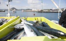 Oria confía en que la costera de bonito compense el recorte del 20% en la cuota de verdel