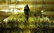 La Guardia Civil ha intervenido 9.200 plantas de marihuana este año, un 67% más que en 2017