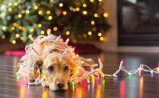 Navidad segura para nuestras mascotas