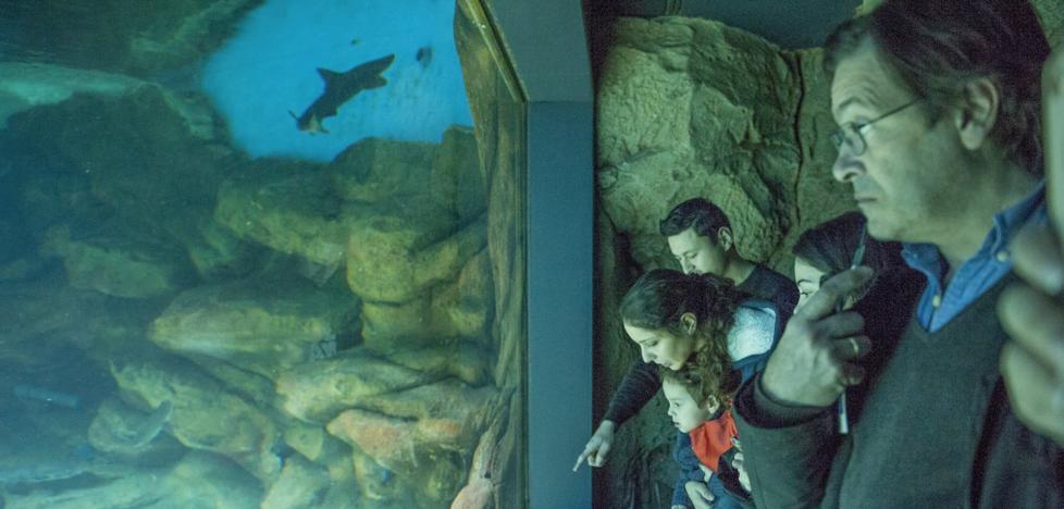 El Museo Marítimo echará el anzuelo a «nuevos públicos» el año que entra