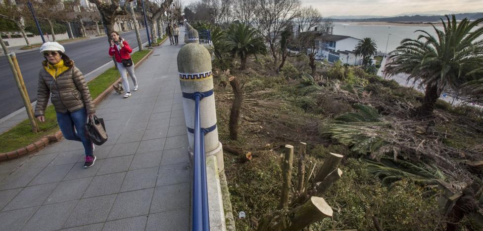 Santander impone 3.000 euros de multa por talar árboles sin licencia