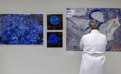 La vida vista a través de un microscopio, en una exposición fotográfica en el hall de Valdecilla