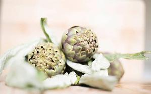 Alcachofa, la flor de la huerta de invierno