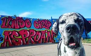 La protectora Asproan: amor y perros