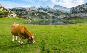 Los lácteos estrenan mañana un etiquetado con el país de origen