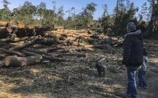 Instan a Medio Natural a reactivar una sanción en el caso del Bosque de Loredo