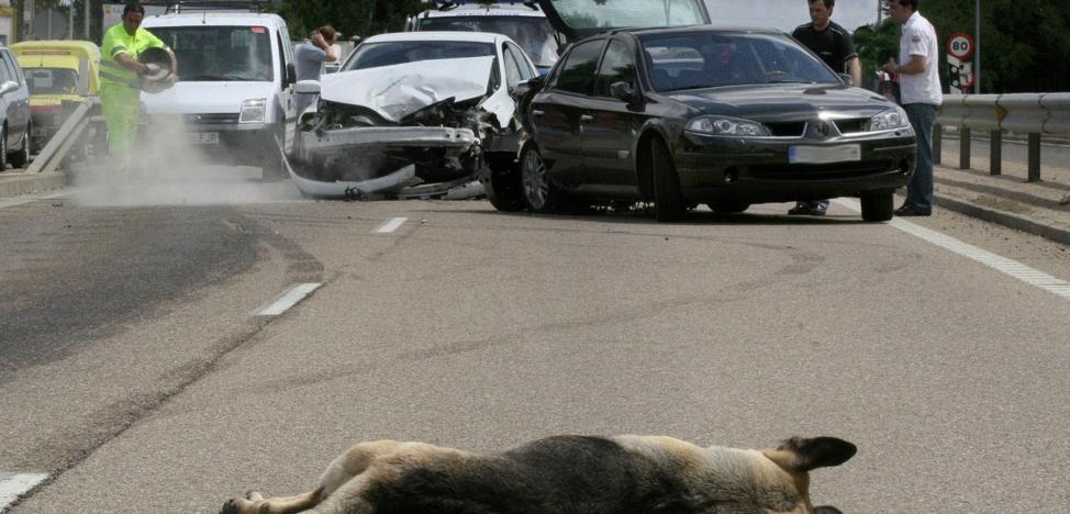 Los animales causaron 449 accidentes en las carreteras de Cantabria en 2018