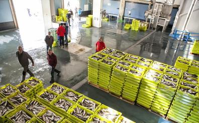 Mal año para la lonja del puerto de San Vicente y bueno para sus pescadores